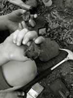 Child hands holding fossil and archeology tools