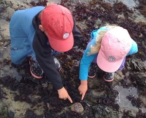 Two young children from above, pointing at tidal pool